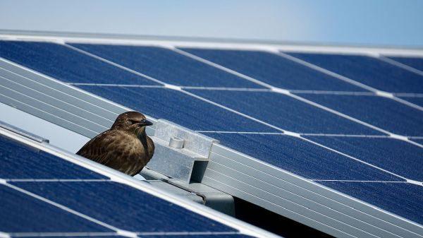 65 MWp: BayWa postaví vPolsku obří solární farmu zcela bez dotací