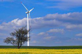 Sázka na zelenou energie se investorům vyplácí