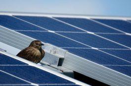 Český developer CTP míří k uhlíkové neutralitě a investuje do fotovoltaiky