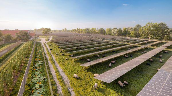 Obří agrivoltaická elektrárna vRakousku sází na biodiverzitu a chov ovcí
