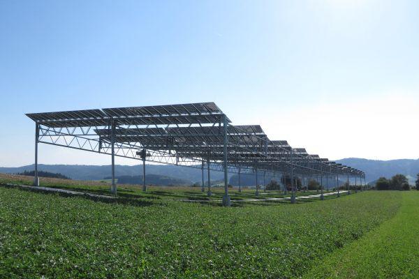 Agrovoltaika již dosáhla cenové konkurenceschopnosti a dynamicky se rozvíjí