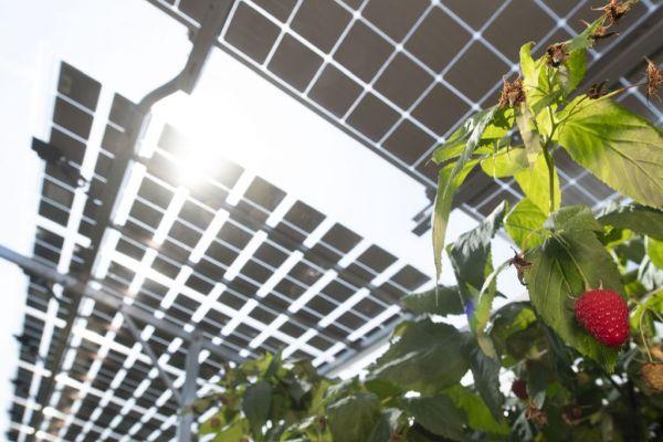 Ocenění za inovace (1.): Agrovoltaický projekt BayWa ukazuje novou dimenzi rozvoje solární energetiky