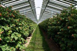 Agrivoltaika – nová éra fotovoltaiky vČesku?