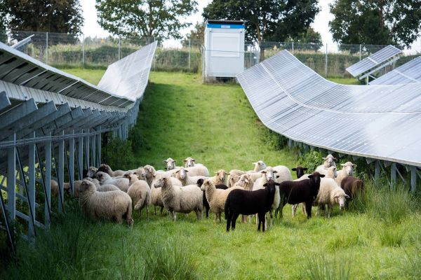 Soláry podpoří dotační smršť, jaká tu ještě nebyla?