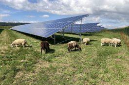 Hledá se: Developer fotovoltaických projektů